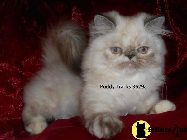 Puddy Tracks Picture 3
